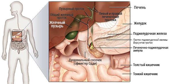 лечение и диета после удаления желчного пузыря