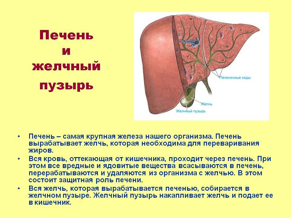 Остеохондроз позвоночника печень и желчный пузырь