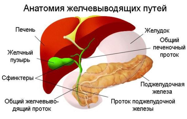 Симптомы и лечение закупорки желчевыводящих путей