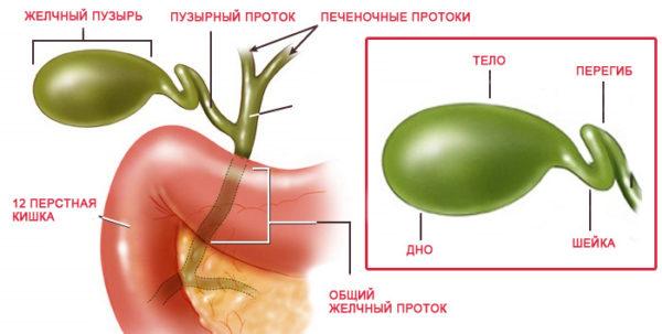 Деформация желчного пузыря